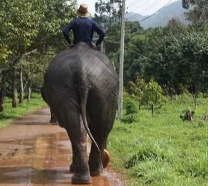 Freiwilligenarbeit Thailand Elefanten
