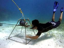 Meeresbiologie-auf-den-Fidschi-Inseln