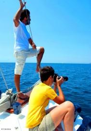 Volunteer im Delphin-Projekt