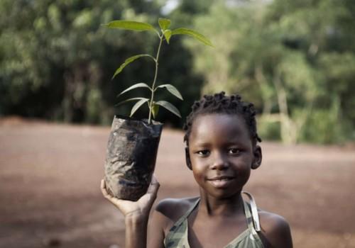 FSJ in Afrika