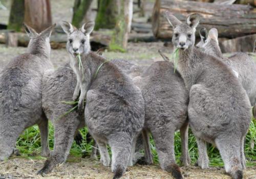 FSJ in Australien & Ozeanien